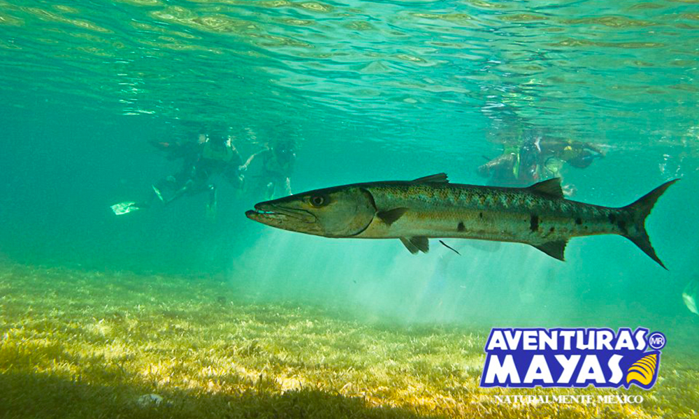 Aventuras-Mayas2-1000x600