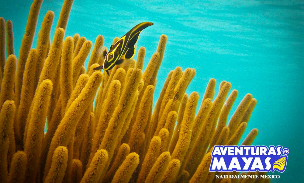Aventuras-Mayas3-1000x601