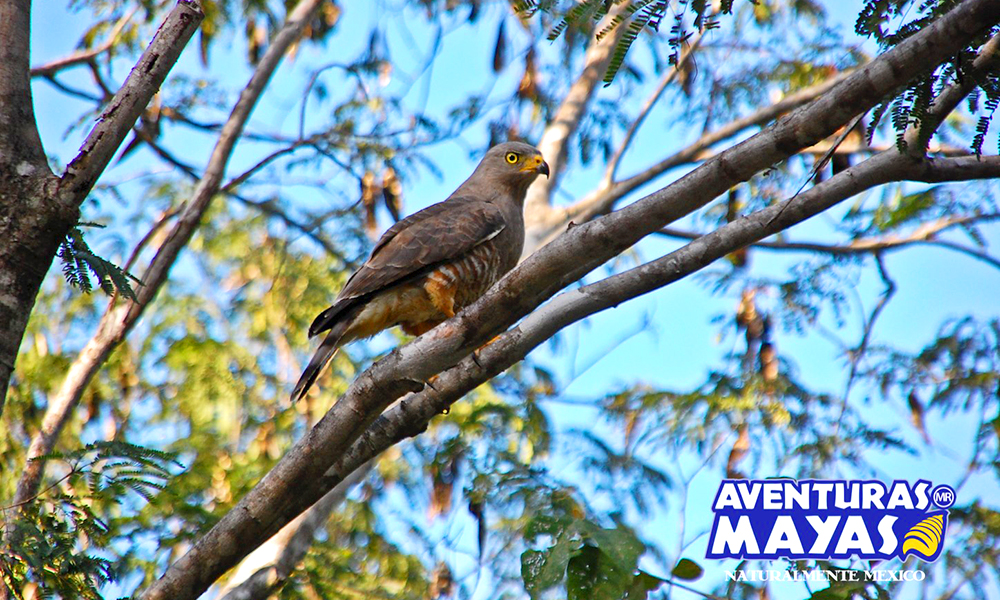 Aventuras-Mayas4-1000x600